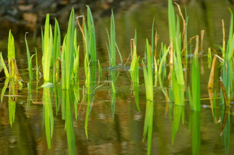 plants_in_water.png?noresize
